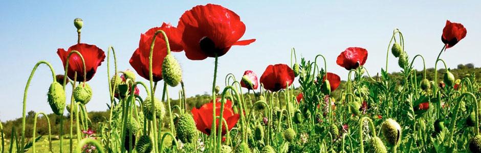 flores de bach - 1Cel Girona